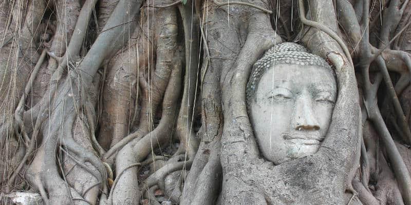 Ayutthaya cosa vedere testa buddha